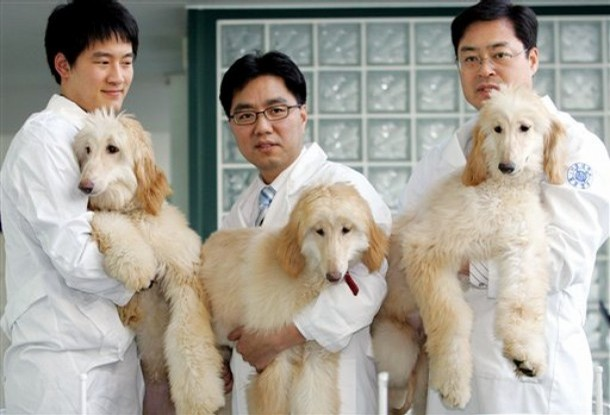 what are the advantages and disadvantages of cloning