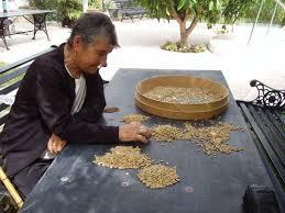 cafe-separacion del grano