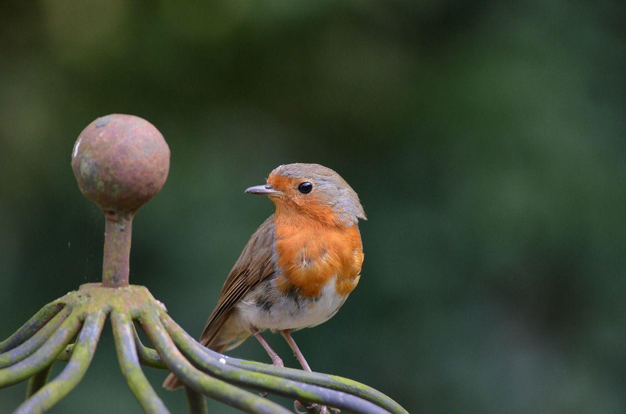Aprendamos de los pájaros