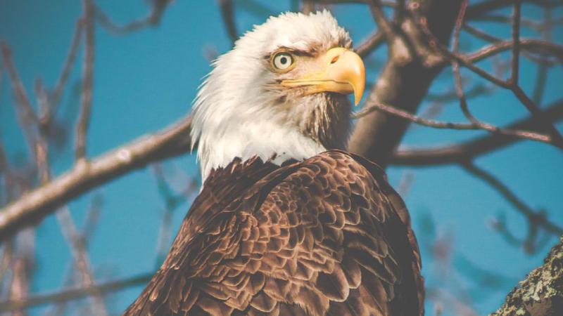 ¡Levántate como las águilas!