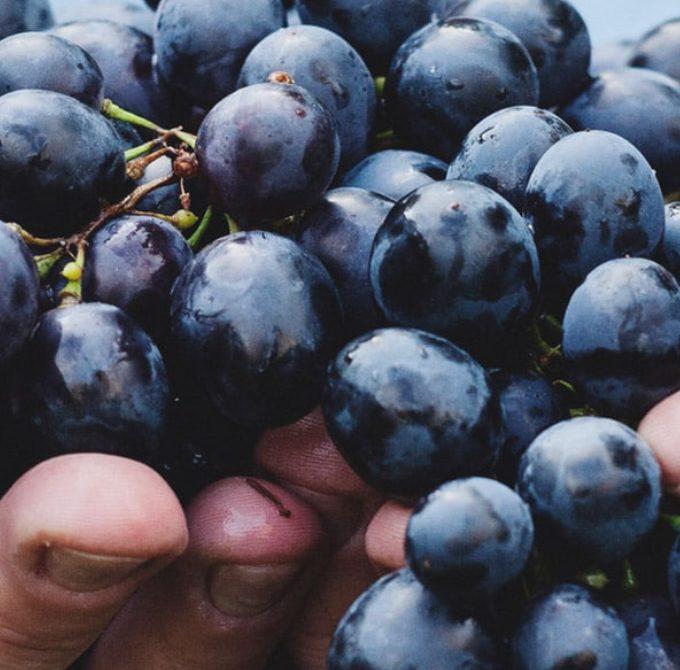 En el tercer año comerás de tu viña